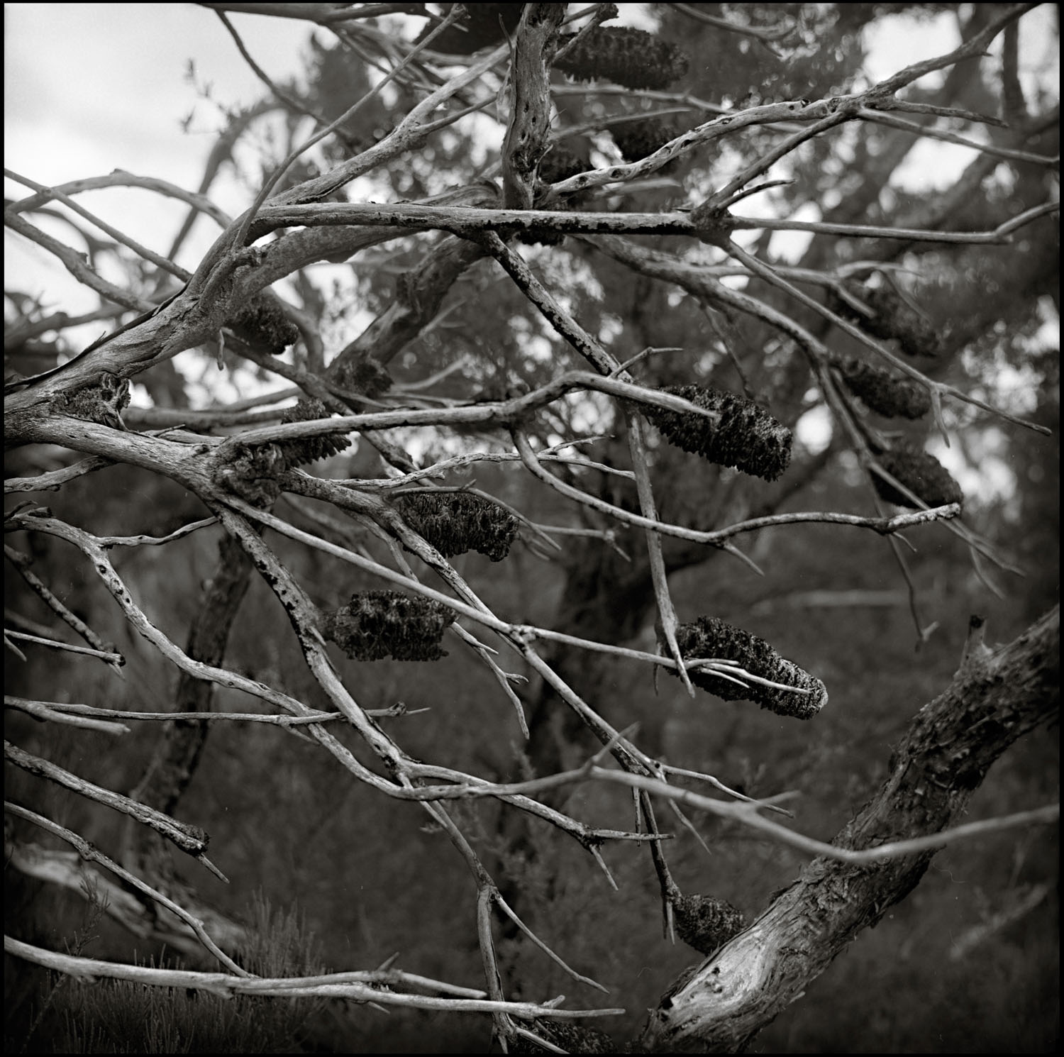 5 Frames With... Kodak T-MAX 400 (EI 200 _ 120 _ Agfa Super Isolette) - by Peter Lee