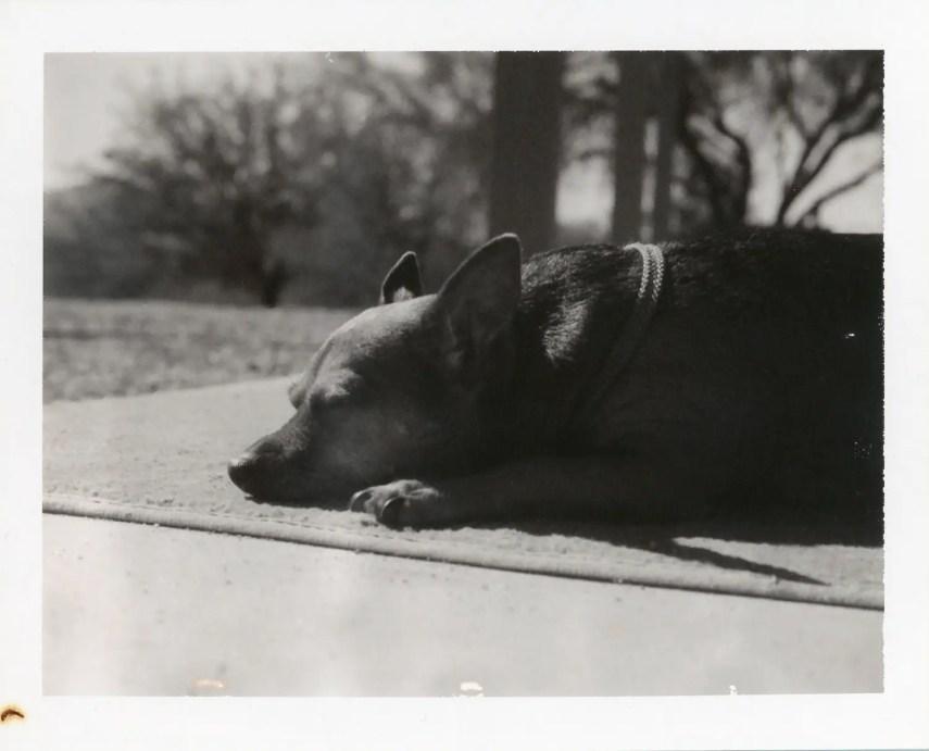 Sleeping in the sun, Polaroid Type 667 with #581 Portrait Kit