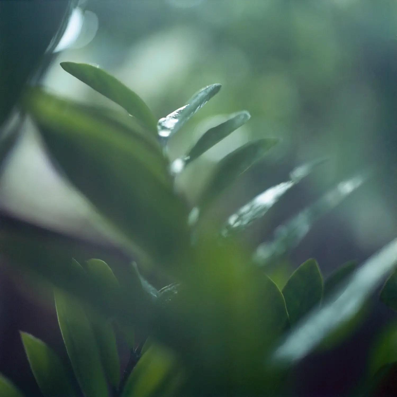 5 Frames With... Fujicolor Reala 100 (120 : El 100 : Mamiya C3) - by Vishal Kullarwar