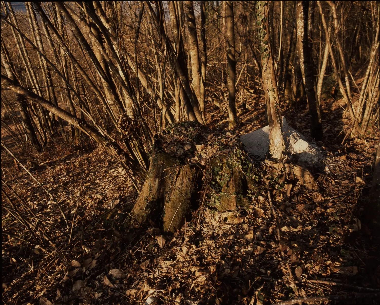 A stump in the woods around my house (Savoie)
