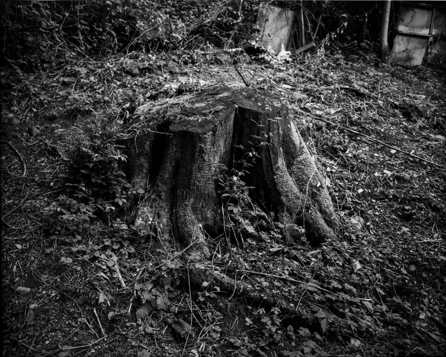 A stump in the woods above where I live.