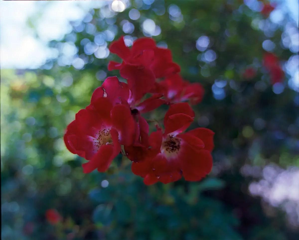 Mamiya RZ69 Pro II + 37mm f/4.5W - Kodak Ektar 100 - La Table (Savoie)