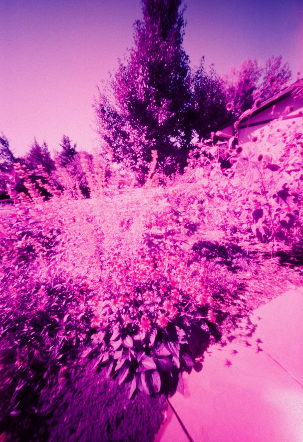Figure 10 - LomoChrome Purple XR 100-400 - Pinhole (30 seconds)