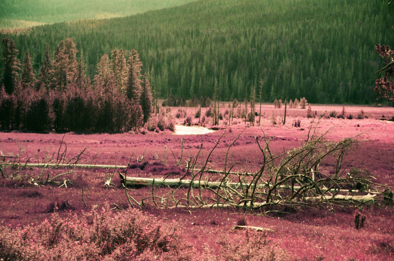 Figure 6 - LomoChrome Purple XR 100-400