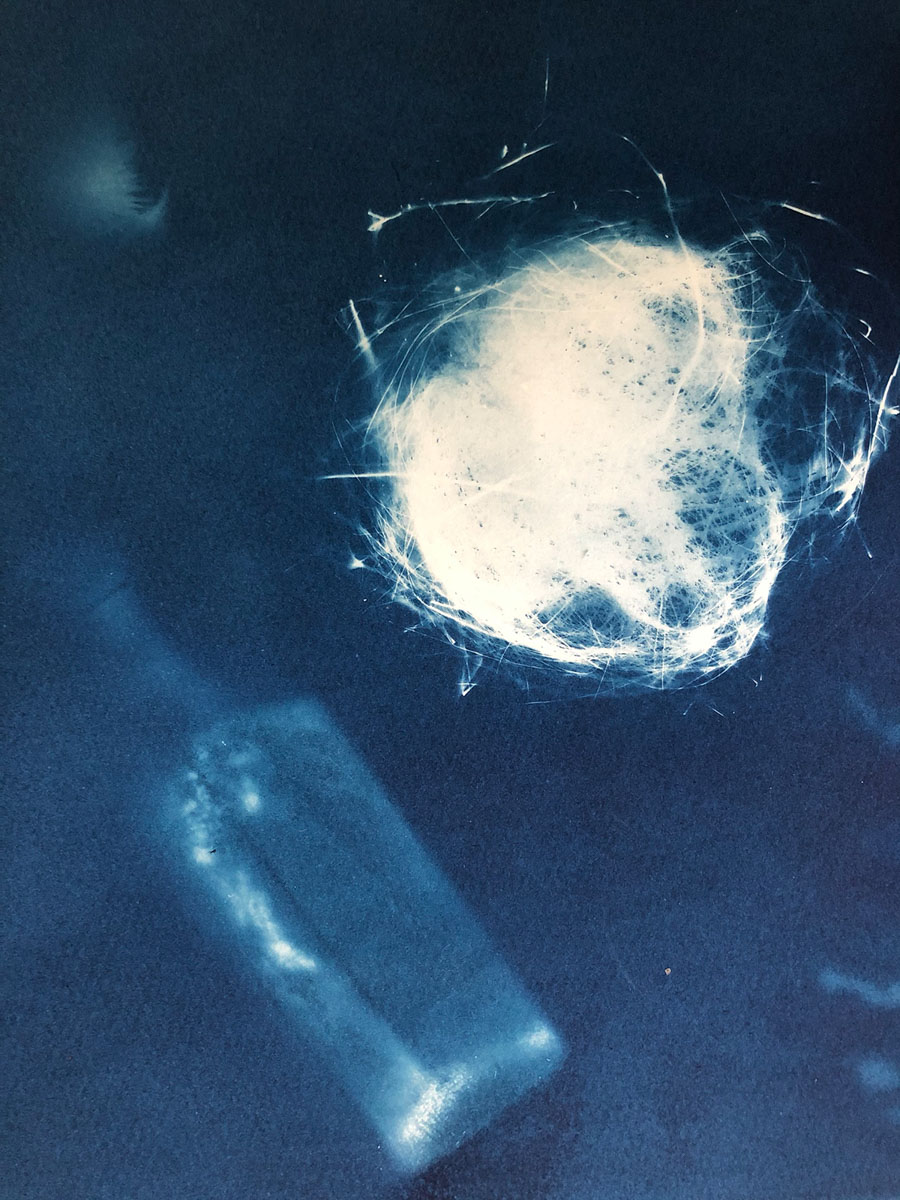 Susan Phillips - Bird's nest and bottle