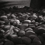 5 Frames With... ILFORD Delta 100 Professional (EI 100 / 120 format / Holga 120N) - by Jennifer Thompson
