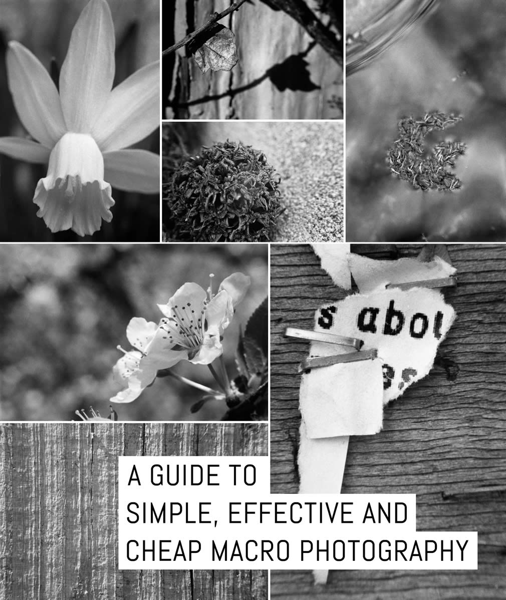 A guide to Simple, effective and CHEAP macro photography   EMULSIVE