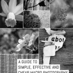 A guide to; Simple, effective and CHEAP macro photography