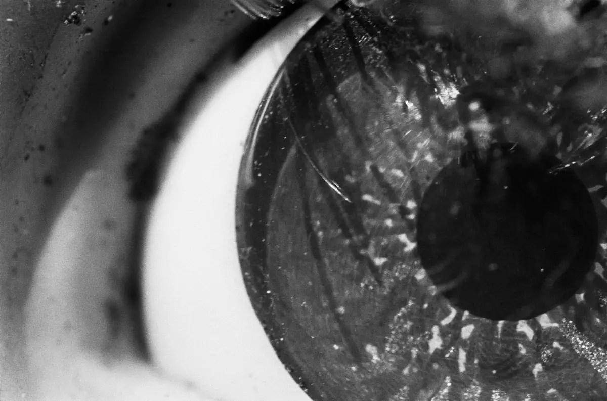 Doll's eye - Nikkor 24mm f/2.8 (reversed) - Nikon F2 and Kodak EASTMAN 5222 Double-X
