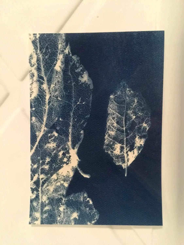 Monika - Leaf skeleton cyanotype print