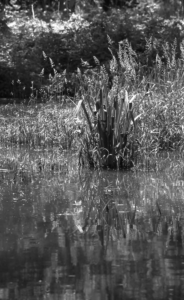 5 Frames... With Adox Scala 160 (35mm / EI 160 / Nikon F5) by Wyman Pattee