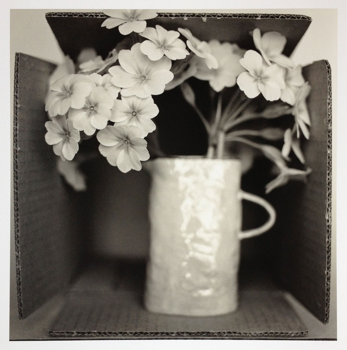 Still life - Flowers in a cardboard box
