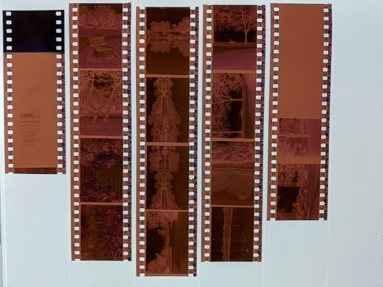 Fujifilm 400N negatives, Toni Skokovic