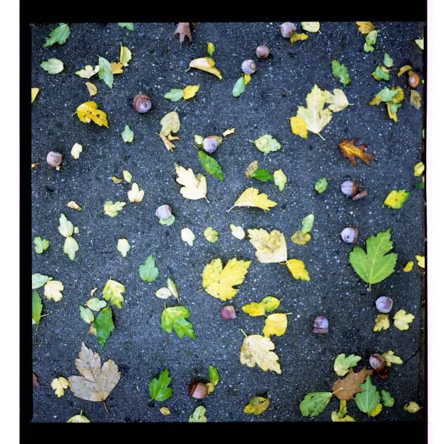 Fall - Hasselblad 203FE, Kodak Porta 800