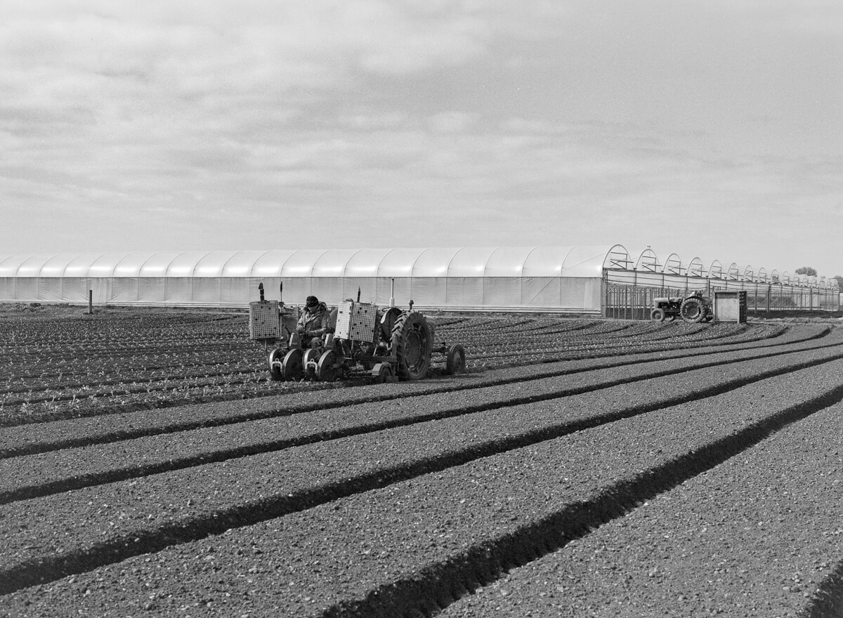 5 Frames... Of the Asparagus Capital of England with ILFORD XP2 Super (EI 400 / 120 format / Pentax 645n) - by Wendy Chapman