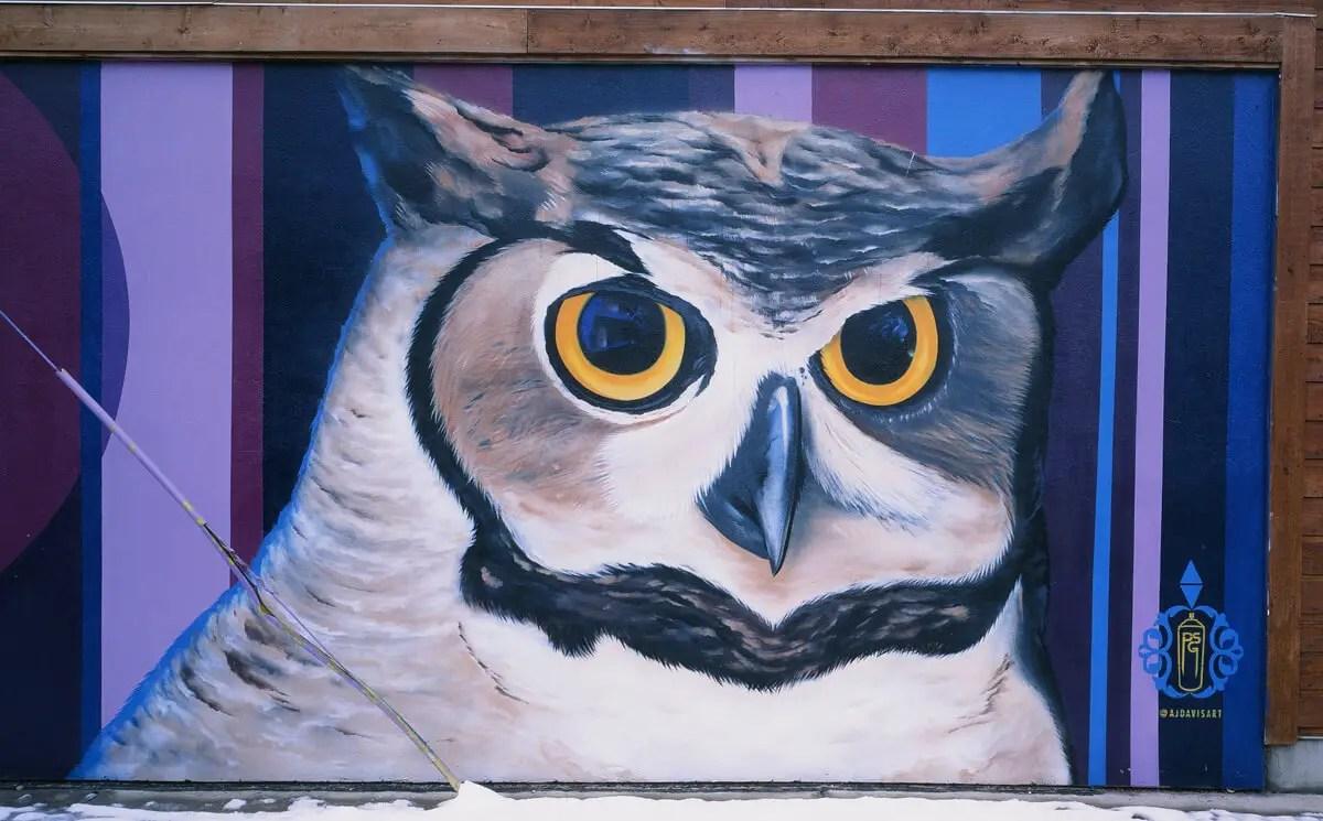 Owl - Fujifilm Fujichrome Velvia 50 (RVP50)