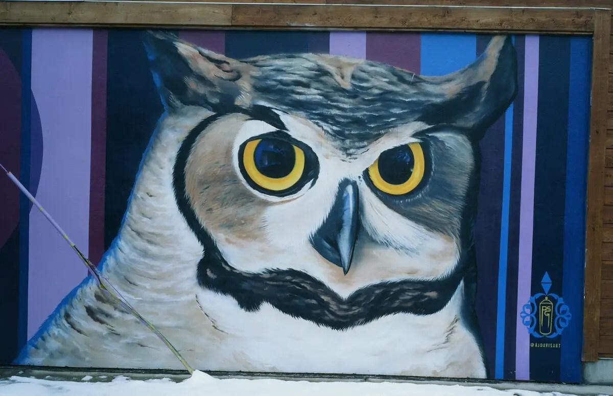 Owl - Kodak EKTACHROME E100