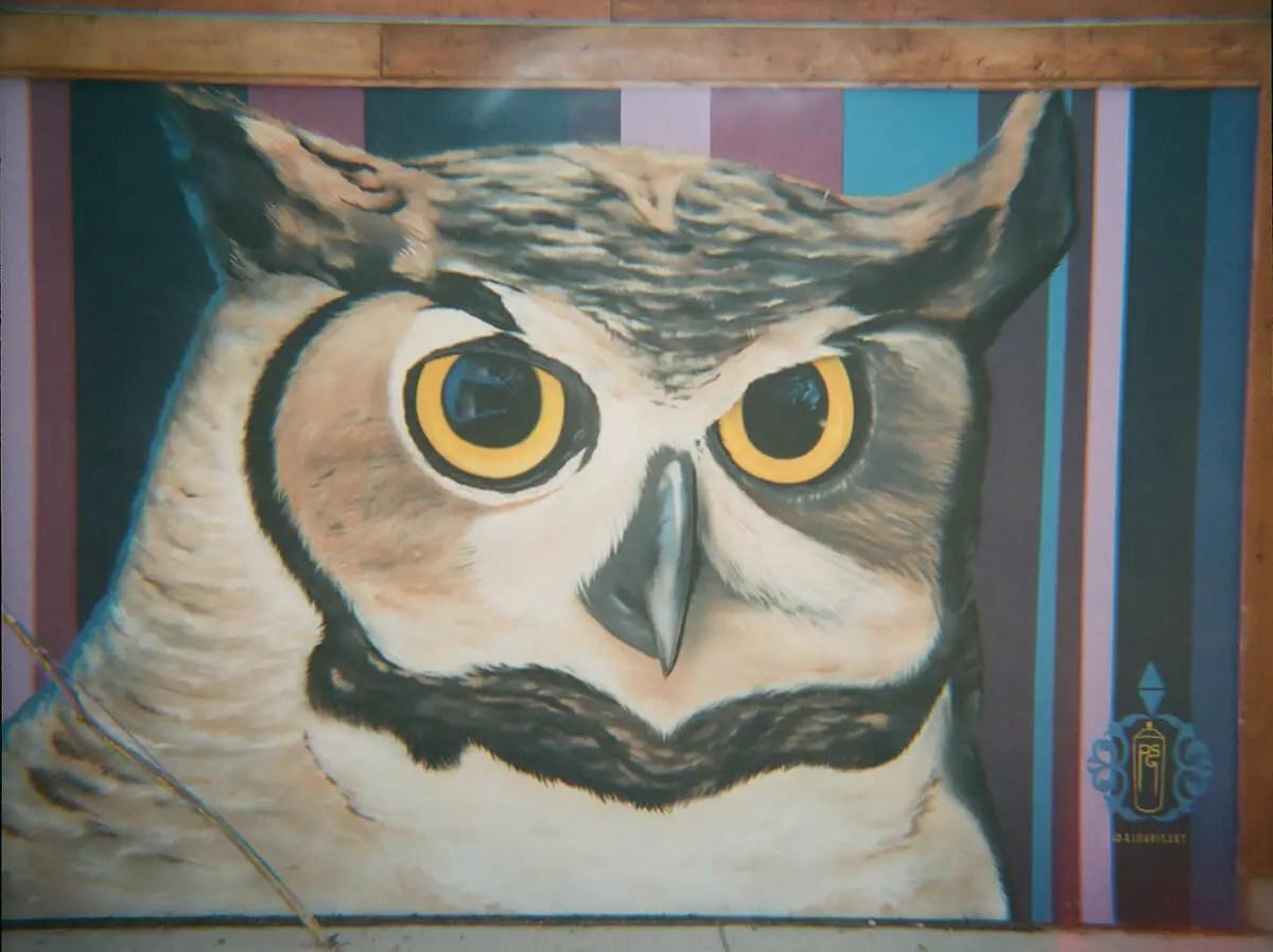 Owl - Lomography CN800