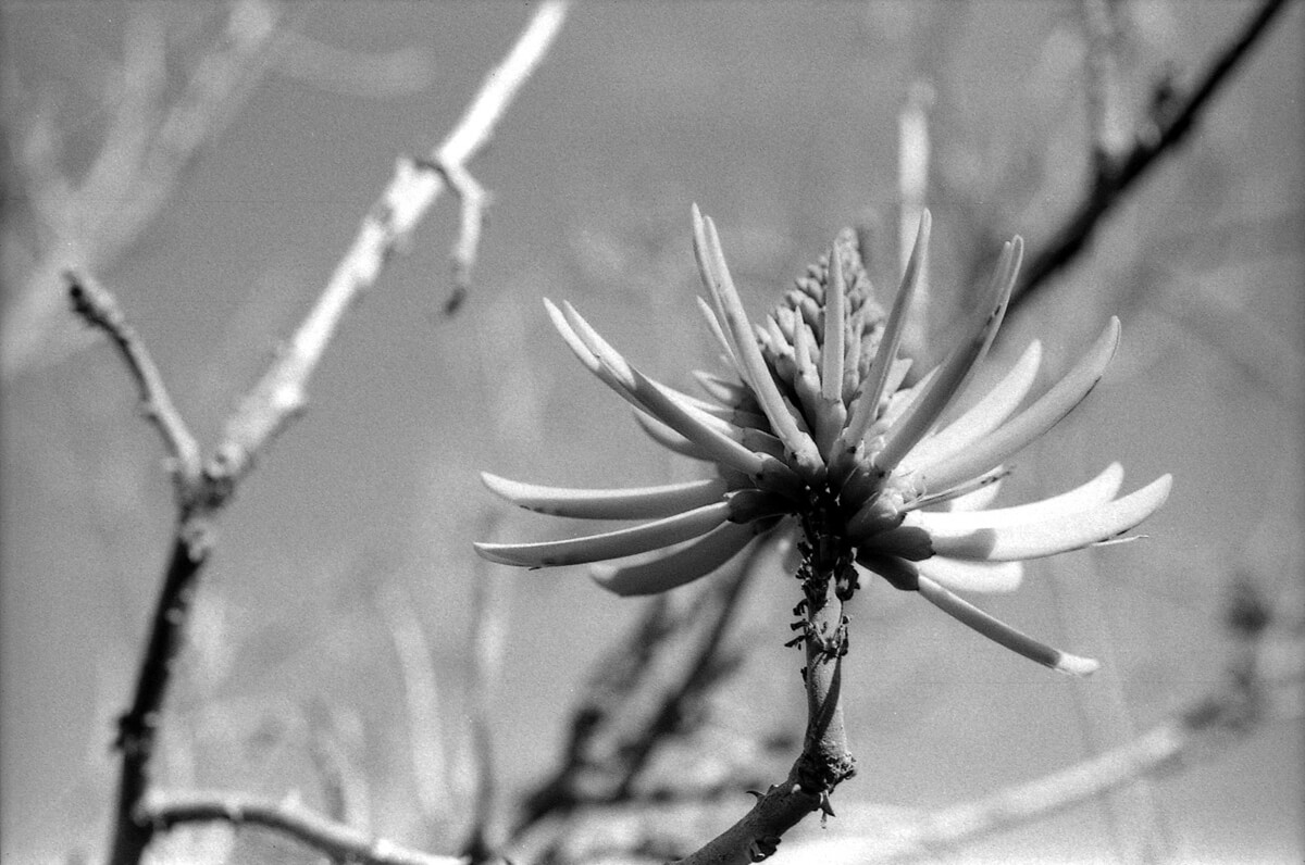 5 Frames... Of Kodak Plus-X Aerecon II 3404 (35mm format / EI 50 / Nikkormat FTN + Nikon Micro-Nikkor 55mm f/3.5 Non-AI - James Harr