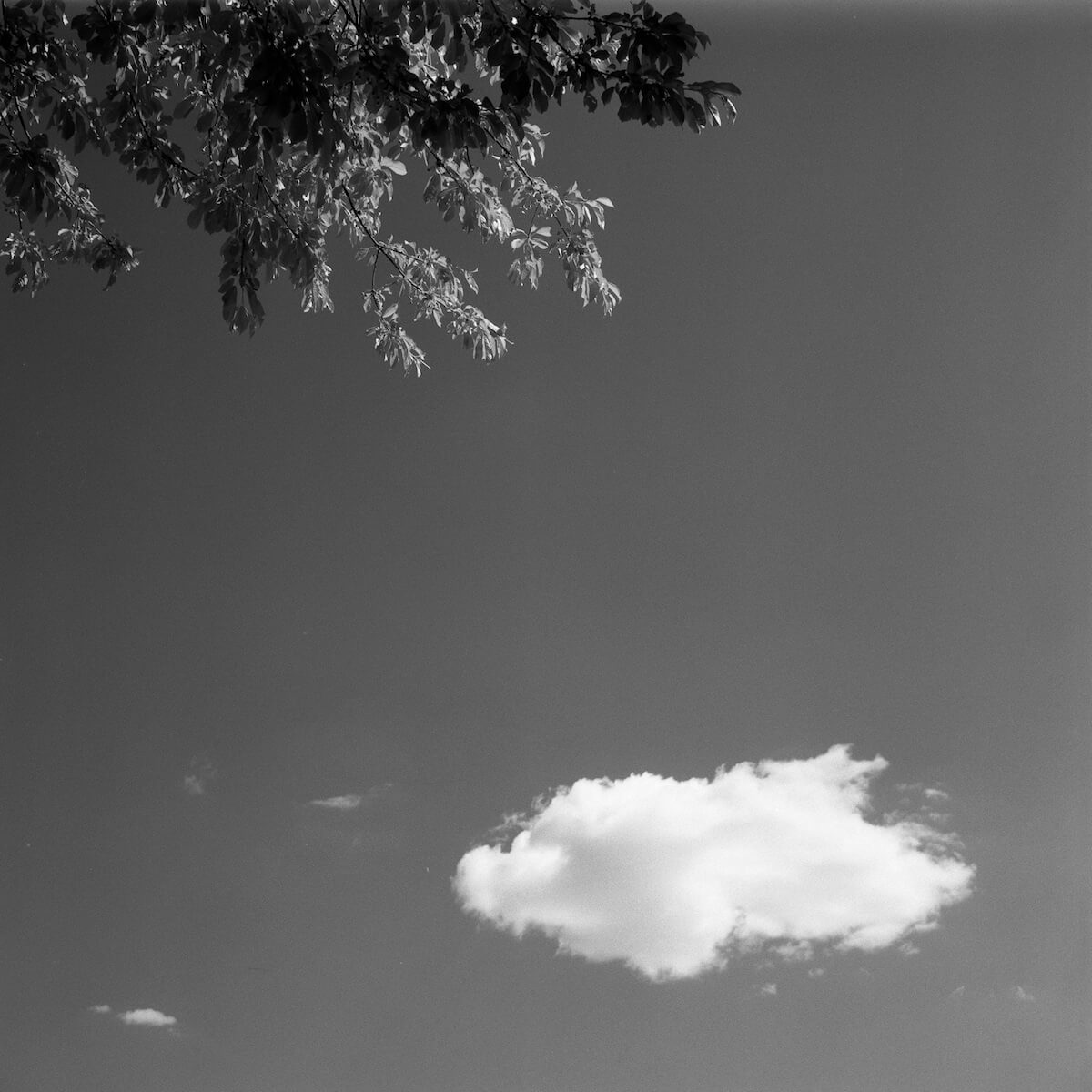 5 Frames... Of a Cumulus afternoon with a red filter on Rollei Superpan 200 (EI 200 / 120 format / Rolleiflex T) - by Olaf Lengler