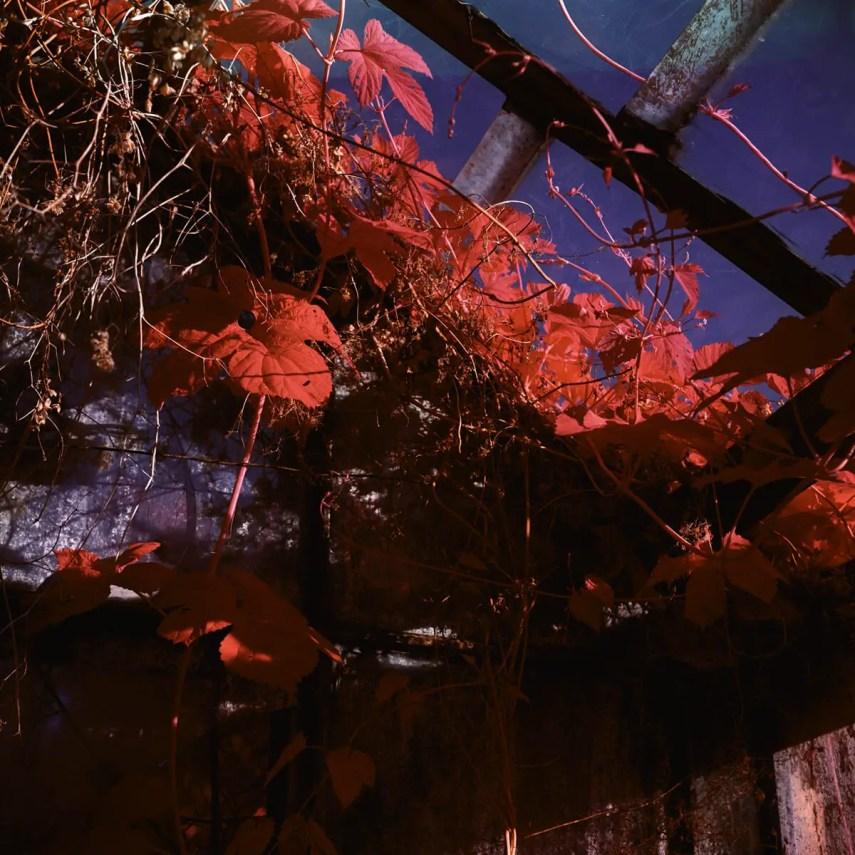 Mikhail Kostin, KIEV-6C - Kodak AEROCHROME III Infrared Film 1443