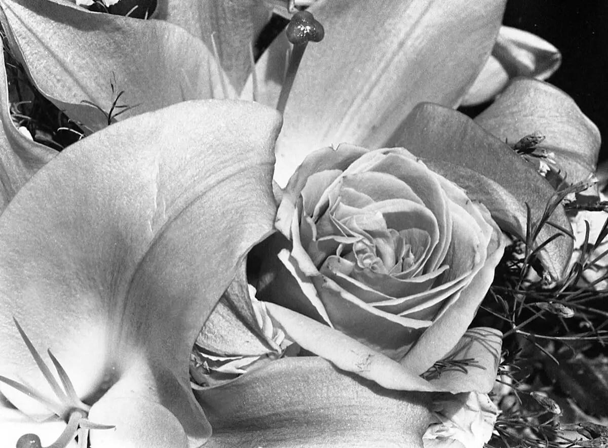 5 Frames (+1)... Of beautiful B&W flowers on ILFORD HP5 PLUS (35mm Format / EI 400 / Minolta X-700 + MD f/3.5 Macro Lens) - by Kathleen E. Johnson - Rose No.2