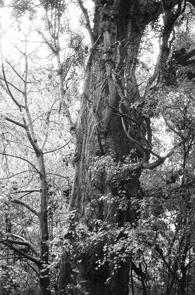 5 Frames... Of ILFORD HP5 PLUS developed in Caffenol-C (35mm Format / EI 400 / Voigtlander Bessa R2 + Leica Summicron 50mm) - by David M