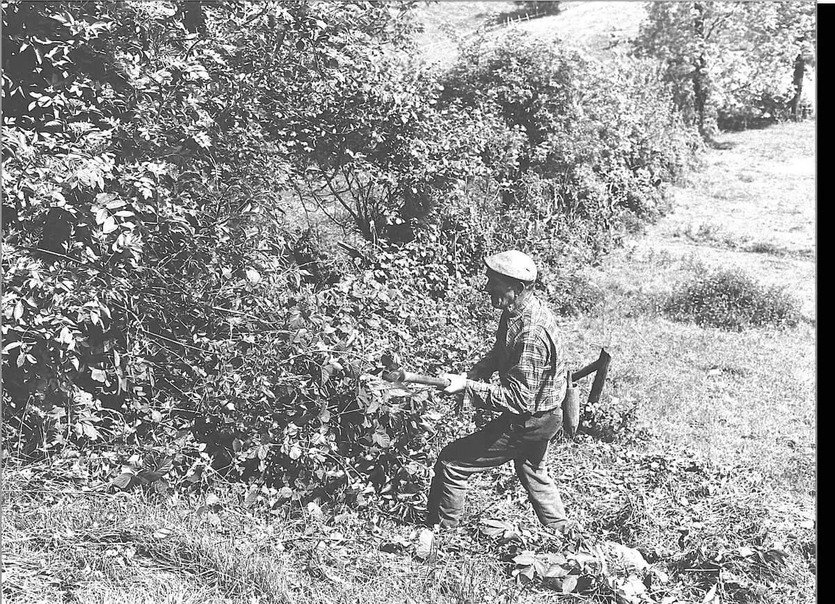 1980 - Pépé working the hedges