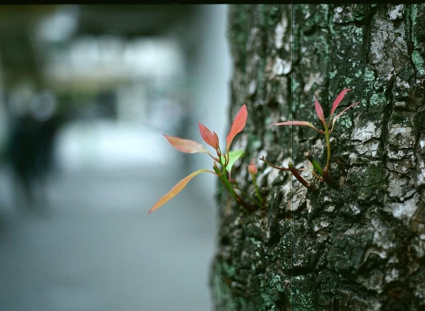 Auburn shoots - Fuji Pro 160C shot at EI 100. Color negative film in 120 format shot as 6x4.5.