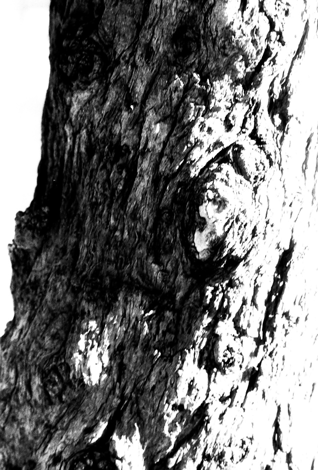 Stumped - Polypan F shot at EI 400. Black and white negative film in 35mm format. Push processed three stops.