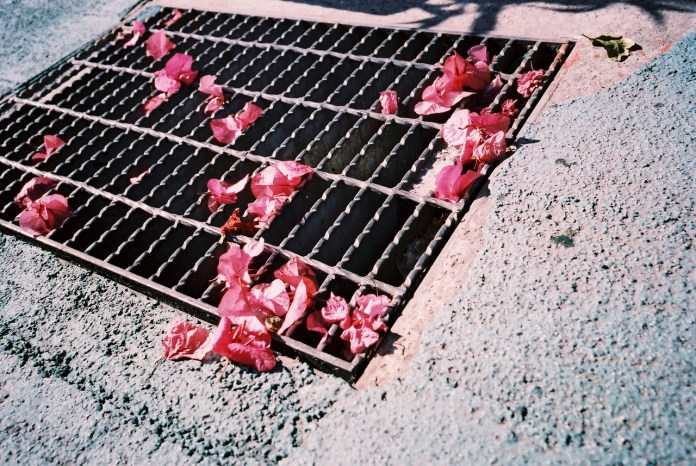 Grate pinks - Lucky Color Film Super 200 shot at EI 200. Color negative film in 35mm format.