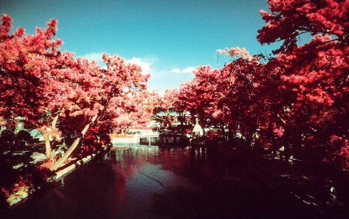 Tranquility - Shot on Kodak Aerochrome III (1443) shot at EI 400. Color infrared slide film in 35mm format. Orange #21 filter.