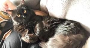 Help Us Bring Bob the Saudi Rescue Cat to Britain GoFundME ViralExposure Booster Campaign