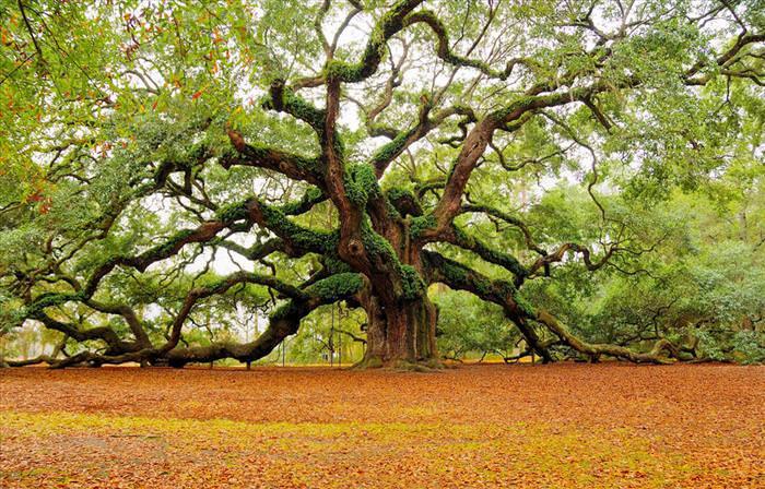 όμορφα δέντρα