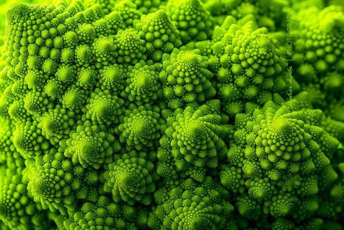 plant geometry