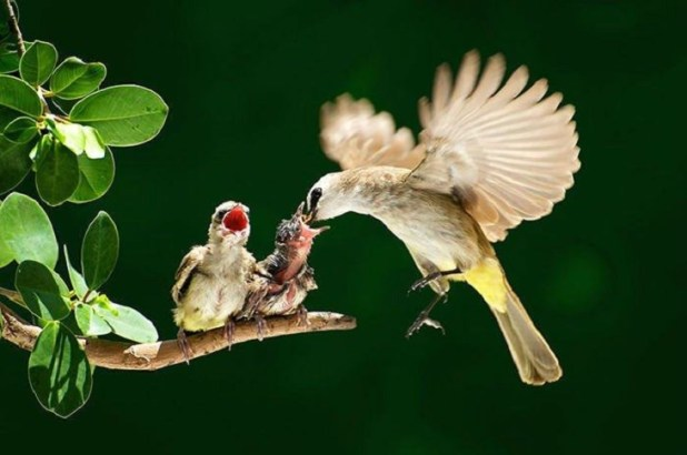 birds, parents