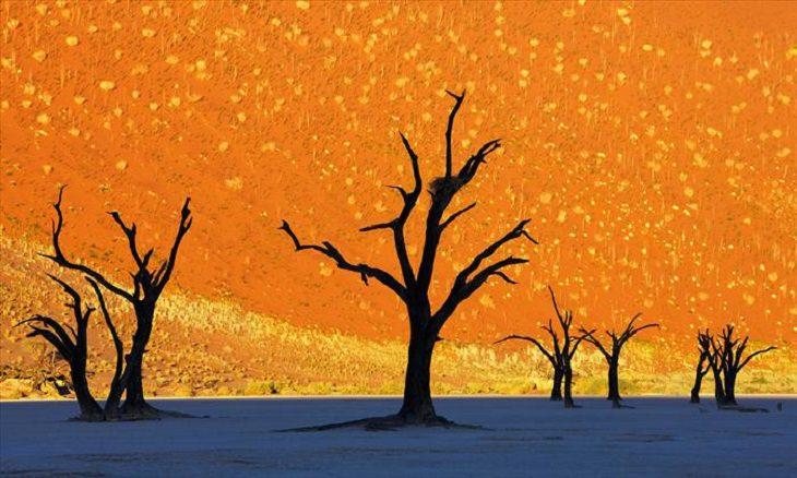 Trees - Beauty - Nature
