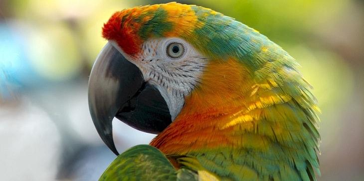 parrot joke