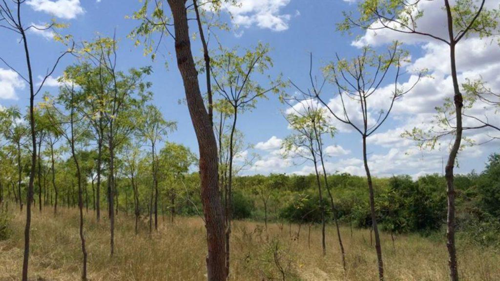 Vista desde las plantaciones de Kiambere en Kenia. 180628