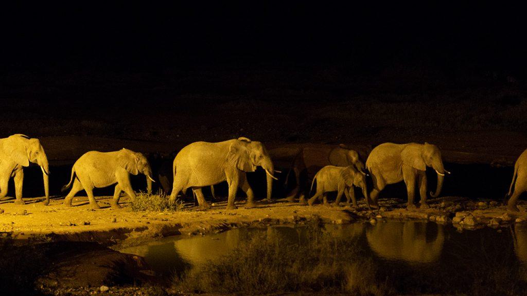 I skymningen kommer ofta elefanterna för att dricka, 150710
