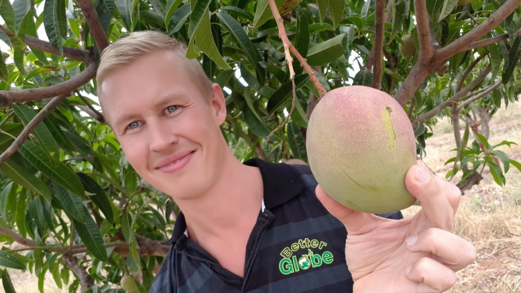 Robin, one of our customers, with an apple mango tree, 170706