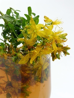 Hypericum: The good mood plant
