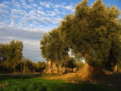 Extremadura is part of the Spanish Federation of Ecological Enterprises