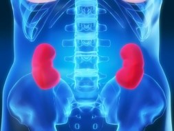 Chronic renal failure and natural treatment