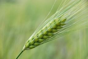 Organic agriculture in Murcia