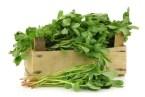 Common Purslane as a Nourishing Plant