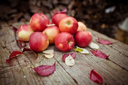 Fall Recipes with Apples
