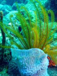 Dulse seaweed recipes