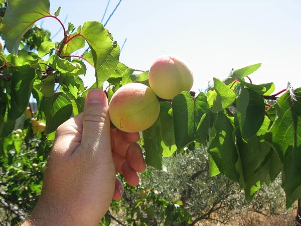 Organic farming in the Cuenca del Tajo