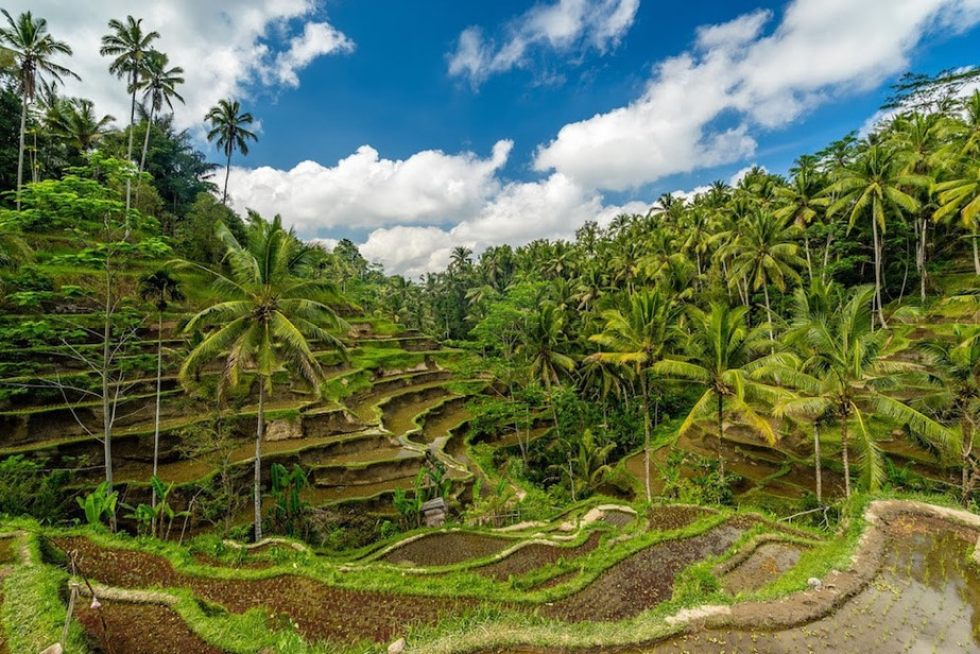 What to do in Bali, Indonesia